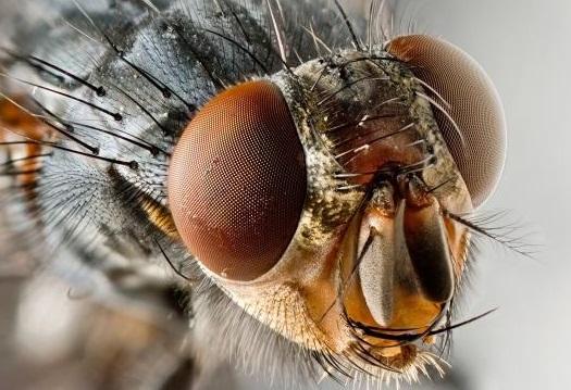 flymad, sinek zihin kontrolü
