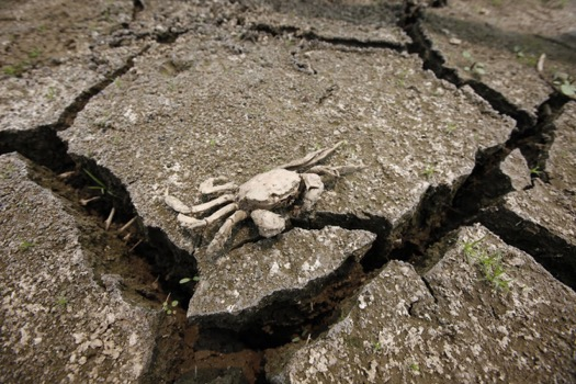 rising-temperatures-are-expected-to-wreak-havoc-on-water-supplies-all-around-the-world-this-crab-carcass-is-sitting-on-a-dried-up-reservoir-near-seoul-south-korea-in-the-midst-of-a-severe-2012-drought-exacerbated-by-uncharacteristically-warm-temperat
