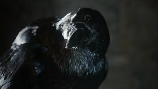 three eyed raven