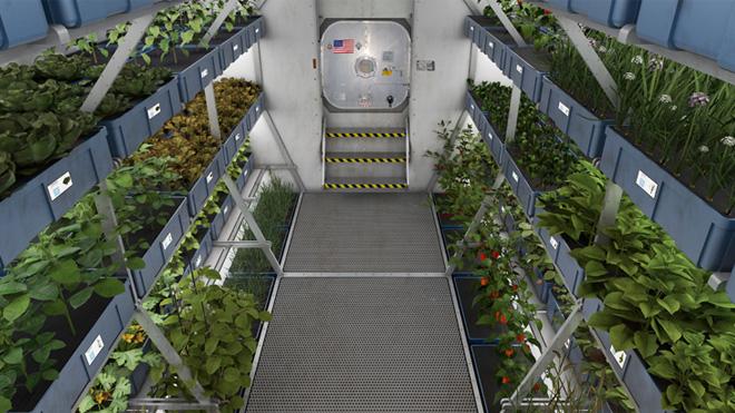 space-lettuce