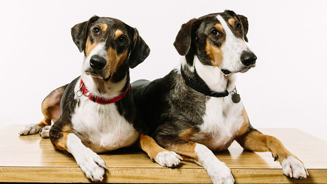 dog-cloning-6_custom-6f263c0d9fd2457d3a5e935bee264e82862e196a-s800-c85