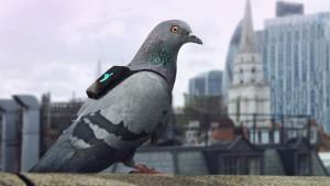 Pigeon Air