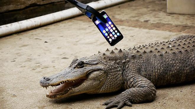 iPhone 7 bu kez de timsaha yem oldu