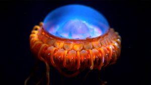 denizanasından ilham alan yapay deri