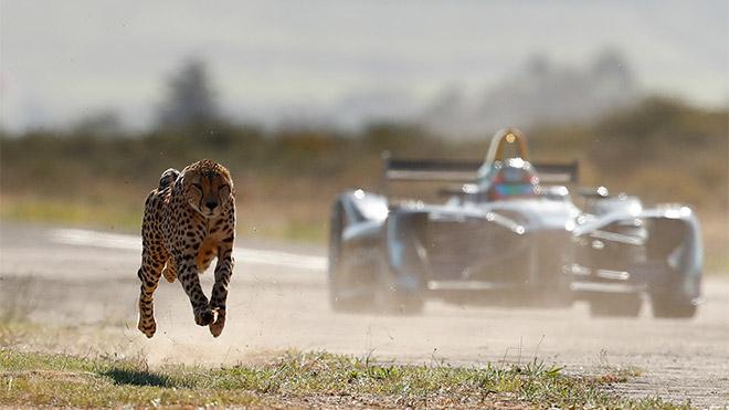 Formula E vs Çita