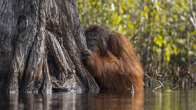 2017 National Geographic Doğa Fotoğrafçısı