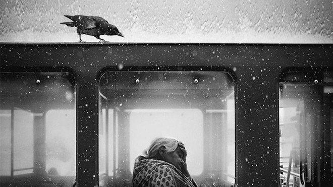 "Jack Savage'ın ""Crow Of Lviv"" isimli fotoğrafı"