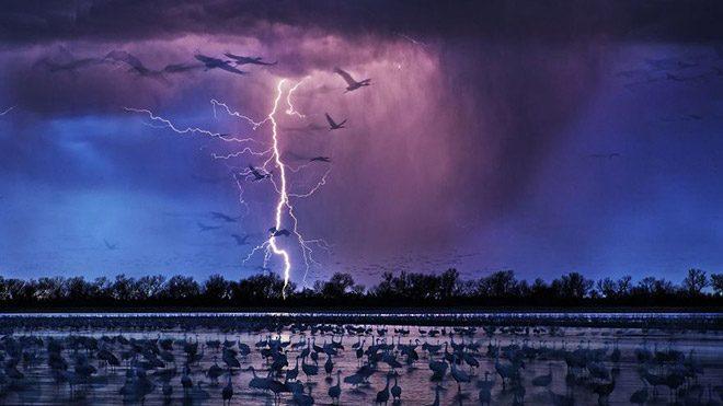 "Yılın fotoğrafı: Randy Olson'un ""Sand Hill Cranes"" isimli fotoğrafı"