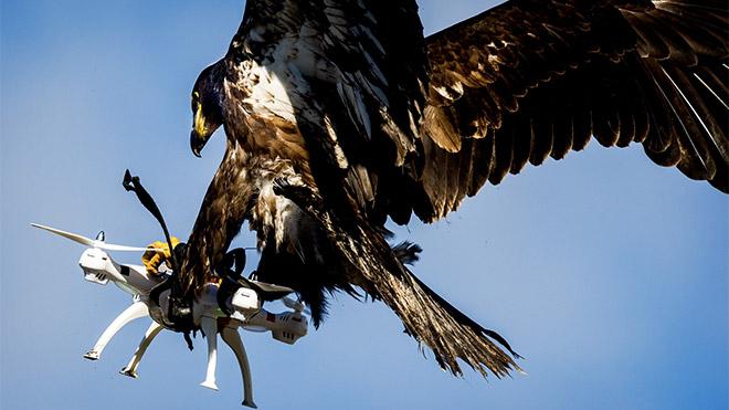 Hollanda kartal ile drone