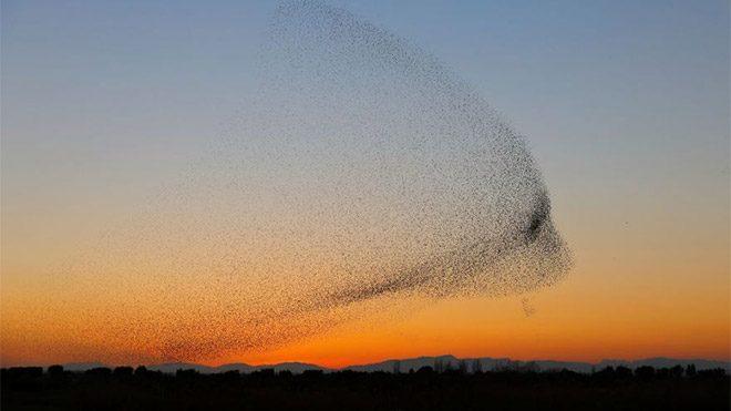 Daniel Biber fotoğraf doğa