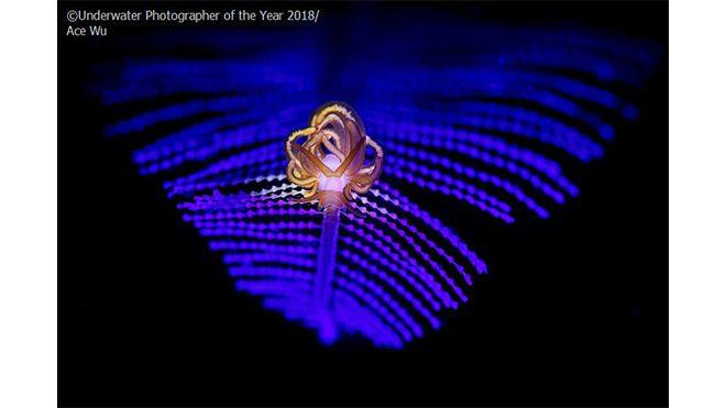 2018 Yılın Sualtı Fotoğrafçısı