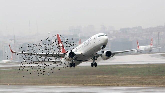 havaalanı drone