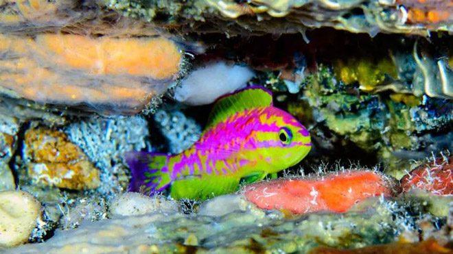 balık türü