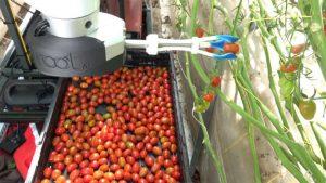 domates toplayan Çiftçi dostu robotik kol root ai virgo 1