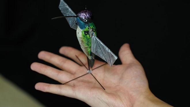Robot kuş