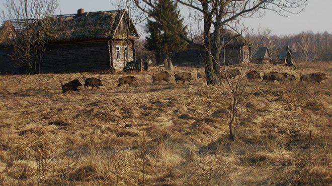 Chernobyl-vahsi-yasam
