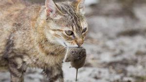 kedi kapısı