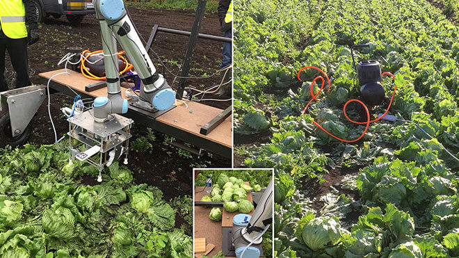 sebze toplama robotu