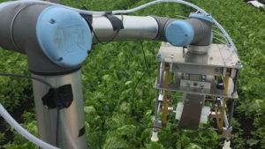 sebze toplama robotu vegebot