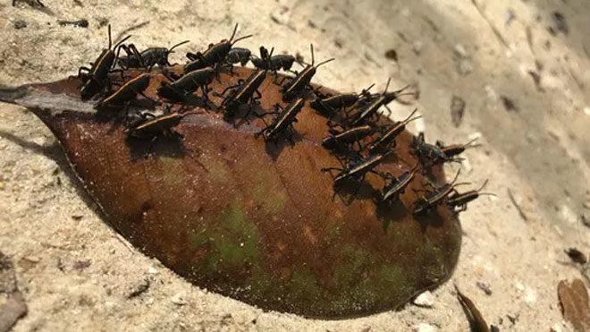 """Yapay zeka bir yaprak üzerindeki böcekleri """"gemi enkazı"""" olarak yanlış tanımlandı."""