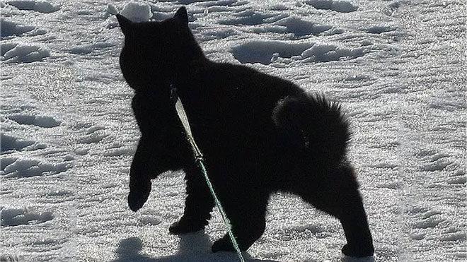 """Algoritma ilginç bir tahminle siyah kediyi """"bir ayı"""" olarak tanımladı."""