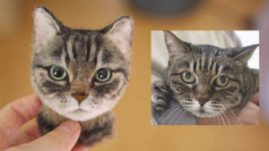 kedi portreleri