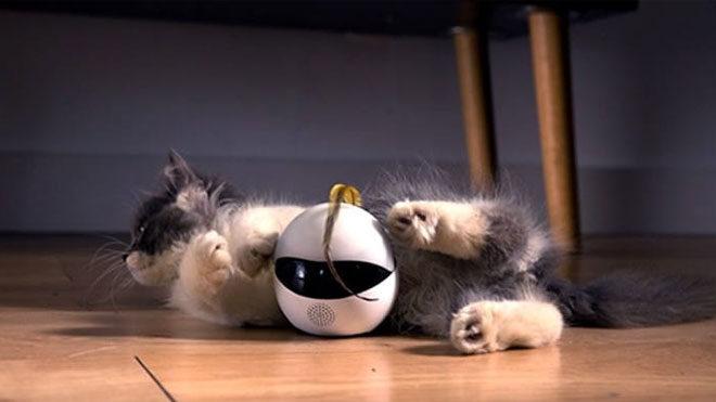 Kediler için mini robot Ebo
