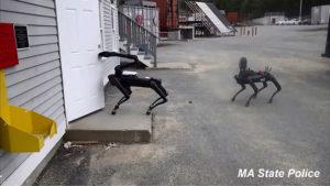Robot polis köpeği Spot