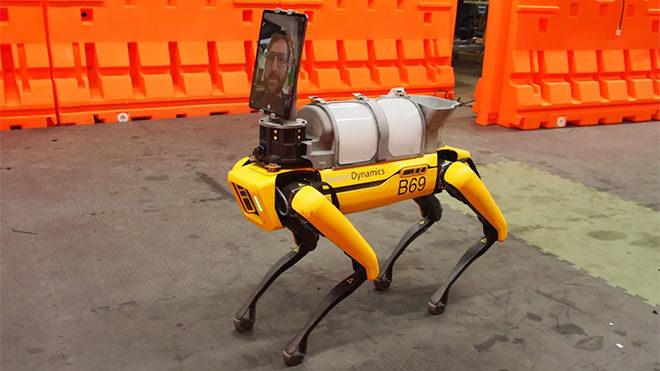 Koronavirüs sürecine dahil olan robot köpek Spot çok etkileyici bir teknoloji harikası