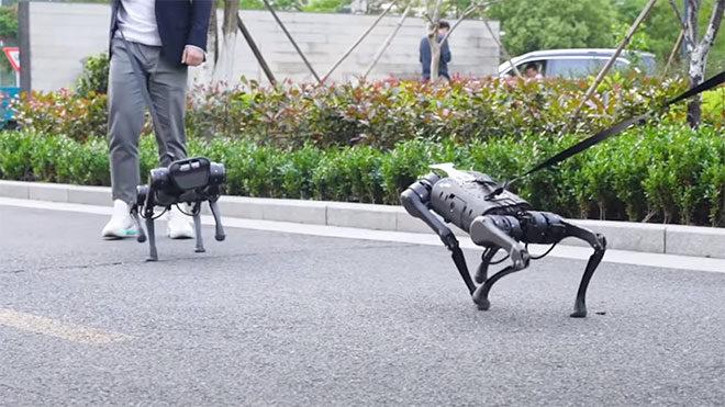 robot köpek